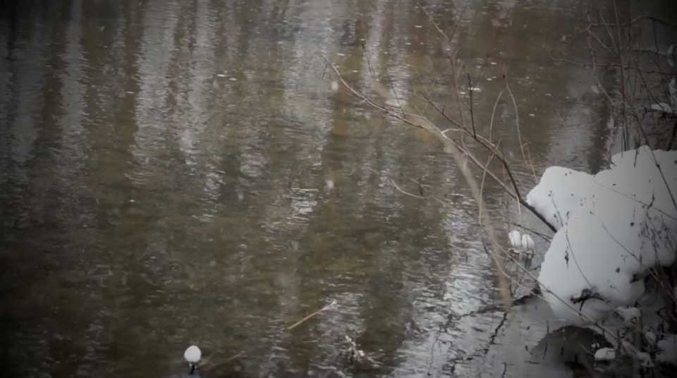 Snowy River Scene 003